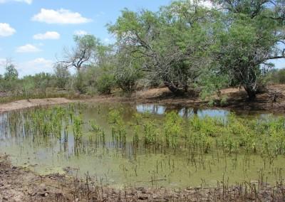 UEC La Palangana Uranium Mine Permitting Support